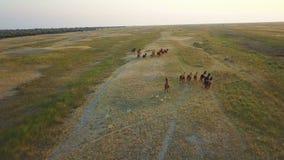 Herde von Pferden Luftvermessung stock footage
