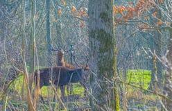 Herde von Rotwild in einem Naturpark im Winter im Sonnenlicht Lizenzfreies Stockbild
