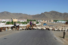 Herde von sheeps in Mongolei Lizenzfreie Stockbilder
