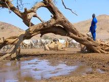 Herde von Tieren in Sudan, Afrika Lizenzfreie Stockbilder