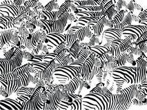 Herde von Zebras lizenzfreie abbildung