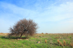 Herde- vårlandskap med det ensamma trädet Arkivbild
