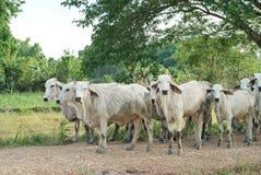 Herden Stockbilder