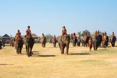 Herden-Elefant-gehende Feld-Verbreitung Lizenzfreie Stockbilder