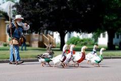 Herden-Gänse in der Kleinstadt-Parade mit altem Mann lizenzfreie stockfotografie