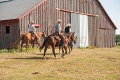 In Herden leben der Kühe Lizenzfreie Stockbilder