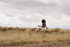 In Herden leben der Schafe Stockbild