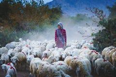 herder stock foto's