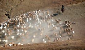 Herder Royalty-vrije Stock Afbeelding