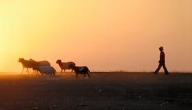 Herder Stock Afbeelding