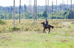 herder Royalty-vrije Stock Foto