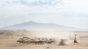 Herder Royalty Free Stock Photos