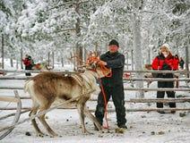 Herder behandeling met het rennen rendier Royalty-vrije Stock Afbeeldingen