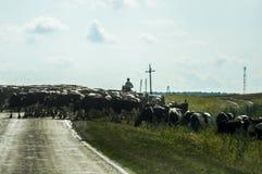 Herder die op paard en kudde van koeien de weg kruisen Royalty-vrije Stock Foto's