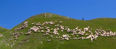 Herder en zijn troep Royalty-vrije Stock Afbeeldingen