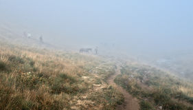 Herder and horses in  fog Stock Photo