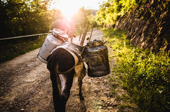 Herder met een ezel Royalty-vrije Stock Afbeelding