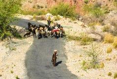 Herder met zijn kudde dichtbij Amb Sharif Stock Fotografie