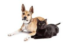 Herder Mix Dog en Zwarte Cat Laying Together Stock Afbeelding
