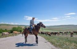 Herder op een paard met zijn koeien Royalty-vrije Stock Foto's