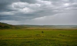 Herder op horseback op het gebied stock fotografie