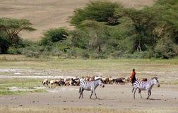 Herder van geiten in Tanzania stock afbeeldingen