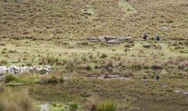 Herderin en dochter met schapen in de lagune van de Andes Peru royalty-vrije stock foto's