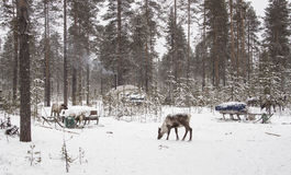 Herders camp in the winter woods Stock Images