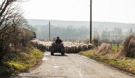 Herders die schapen langs openbare weg hoeden stock fotografie