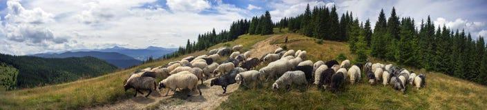 Herders en schapen de Karpaten Royalty-vrije Stock Foto's