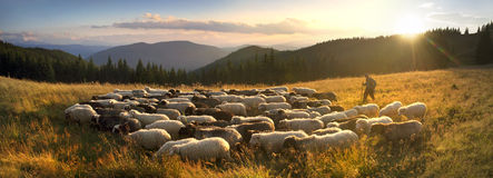 Herders en schapen de Karpaten Stock Fotografie
