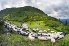 Herders en schapen de Karpaten Stock Foto