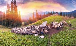 Herders en schapen de Karpaten Royalty-vrije Stock Fotografie