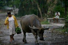 Herding buffalo Royalty Free Stock Images