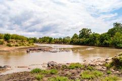 Herds of hippopotamuses in the Mara River of Masai Mara Park in. North West Kenya stock images