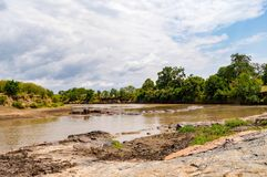 Herds of hippopotamuses in the Mara River of Masai Mara Park in. North West Kenya stock image