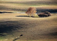 A herdsman of horse in autumn prairie. A herdsman of horse running in prairie in autumn royalty free stock image
