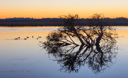 Herdsman Lake at Dawn. Tree silhouette at dawn at Herdsman Lake in Perth, Western Australia Royalty Free Stock Image