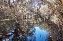 Herdsman Lake Landscape Stock Images