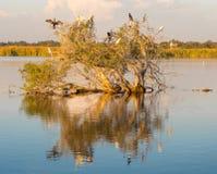 Herdsman Lake Tree Royalty Free Stock Images