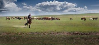 Herdsman Stock Image