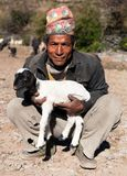 Herdsman with sheep with typical nepali hat on head Royalty Free Stock Image