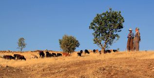 Herdsman Royalty Free Stock Photography