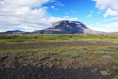 Herdubreid Iceland Royalty Free Stock Images