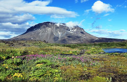 Herdubreid Islanda Fotografie Stock
