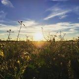 Sunny field royalty free stock photo