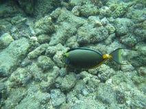 Here Fishy Stock Image