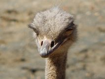 Here`s lookin` at you, Kid! royalty free stock photography