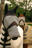 Here's Looking At You Kid. Two horses with fly protectors on Stock Photos