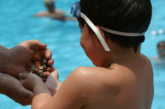 Here's your coins. Man handing coins back to little boy that collected them by diving in the pool Stock Photography